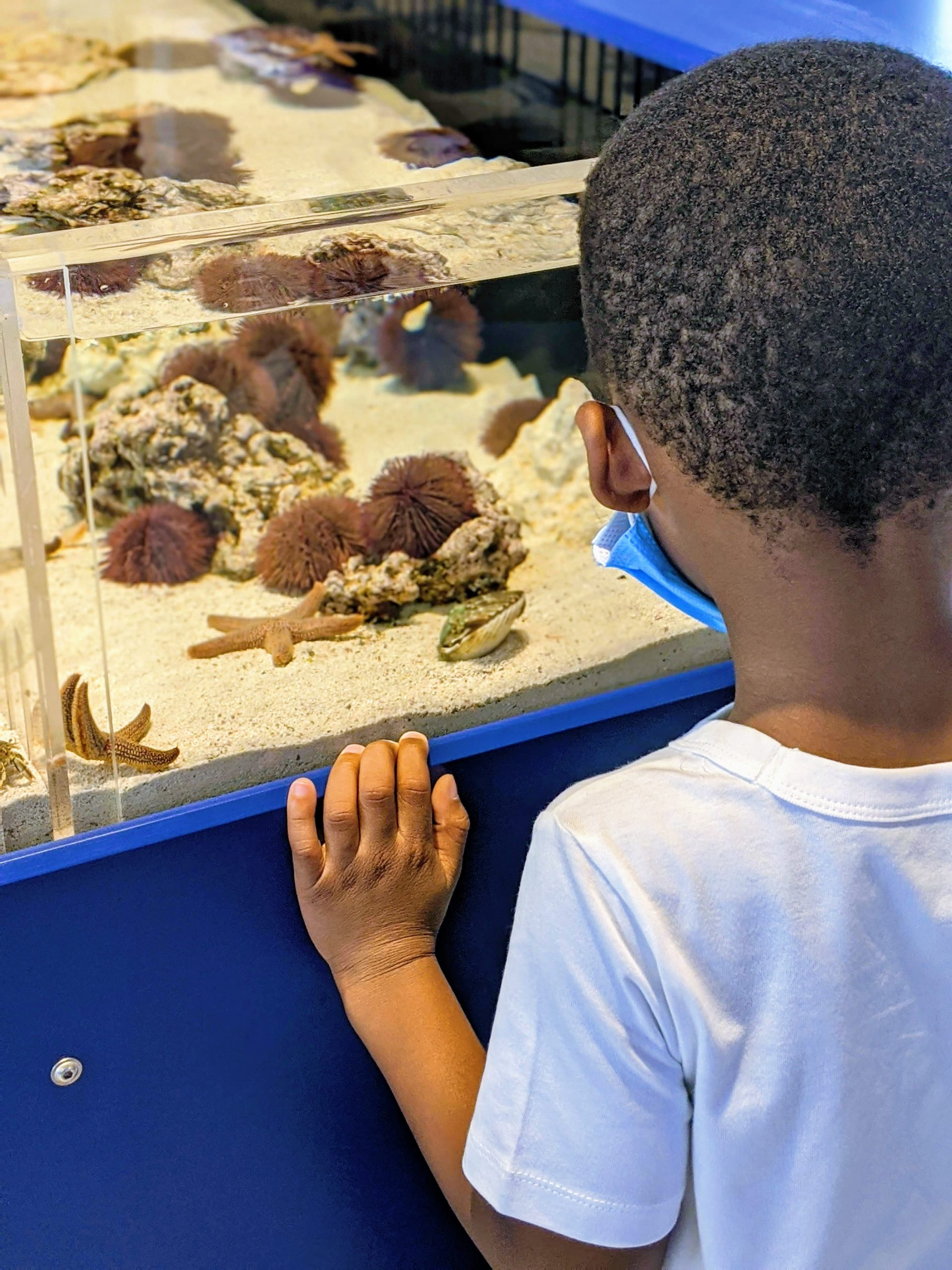 Tampa Bay Watch Discovery Center